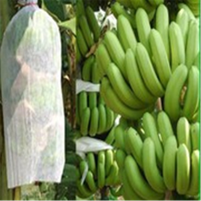 High quality 100%polypropylene spunbond non woven fabric for fruit bag cover