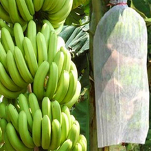 Banana Cover Agricultural 100% PP Spunbond Nonwoven Fabric for Fruit Cover
